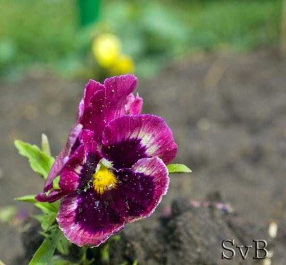 фото цветка