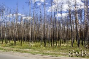 горевшие леса