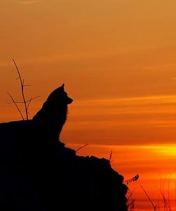 Фотосъемка на природе. Контровый свет.