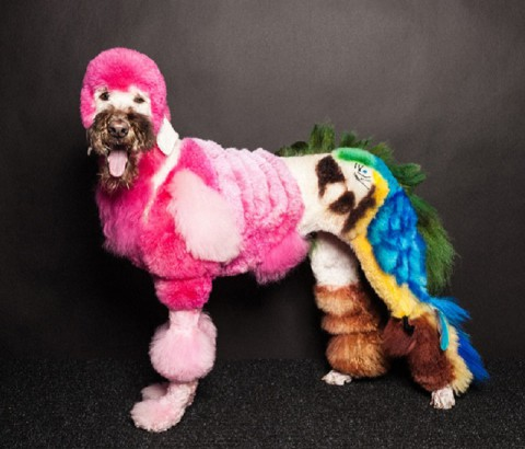 creative-dog-grooming-tropical-flamingo